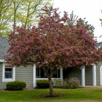 Enjoy the beauty of our cottages in spring at Taylor Retirement Community